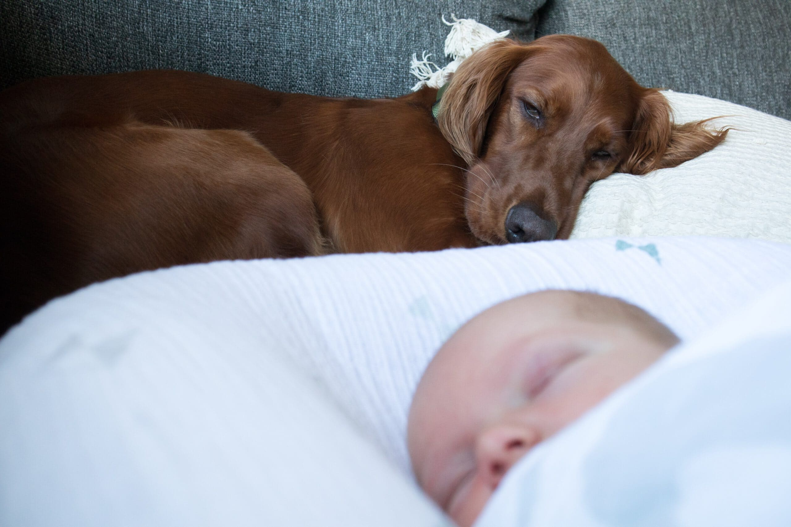 Haustier und Baby